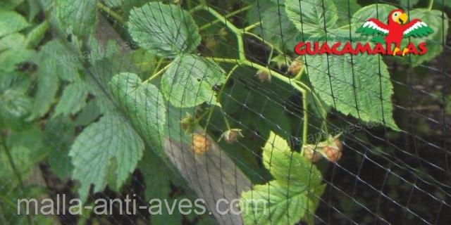 cosecha protegida con GUACAMALLAS.