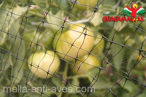 cultivo de tomate con GUACAMALLAS.
