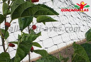 red anti pajaros en cultivo